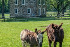 2021_06-210605-Barns-and-BBQ-1350