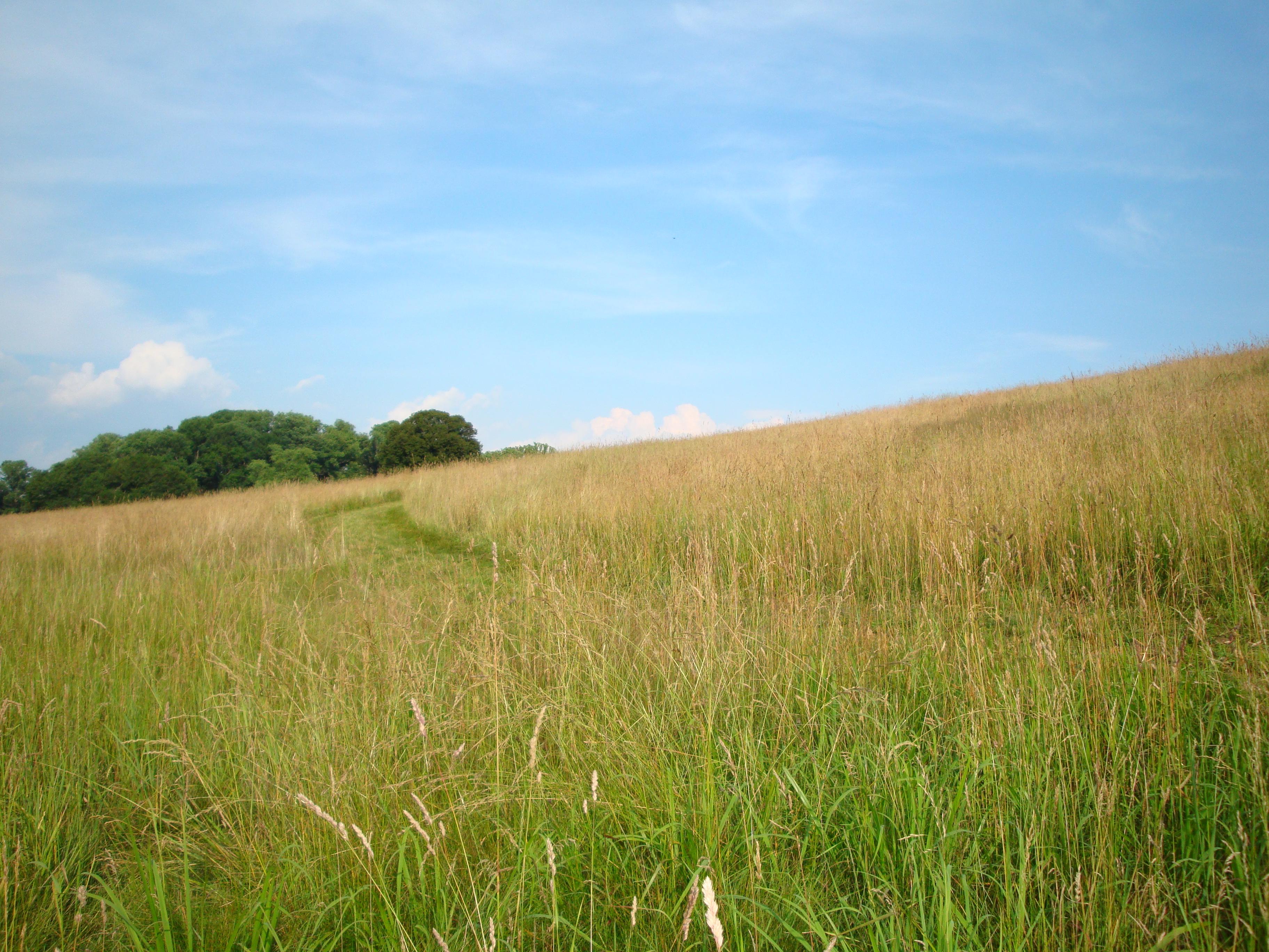 kirkwood-beautiful-mown-path-no-mow-copy