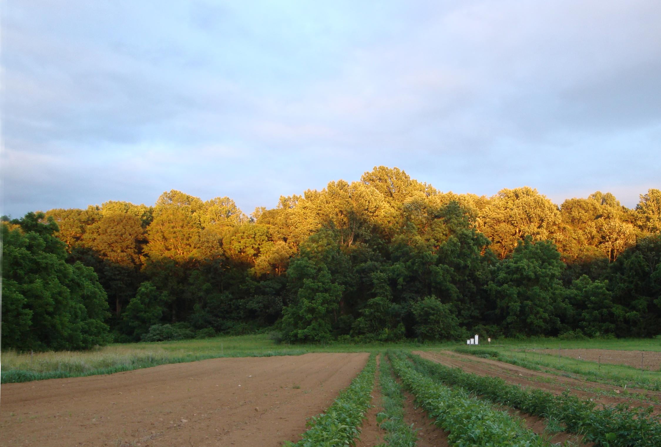 rushton-farm-golden-woods-iconic-image-6-16-10-jds-057