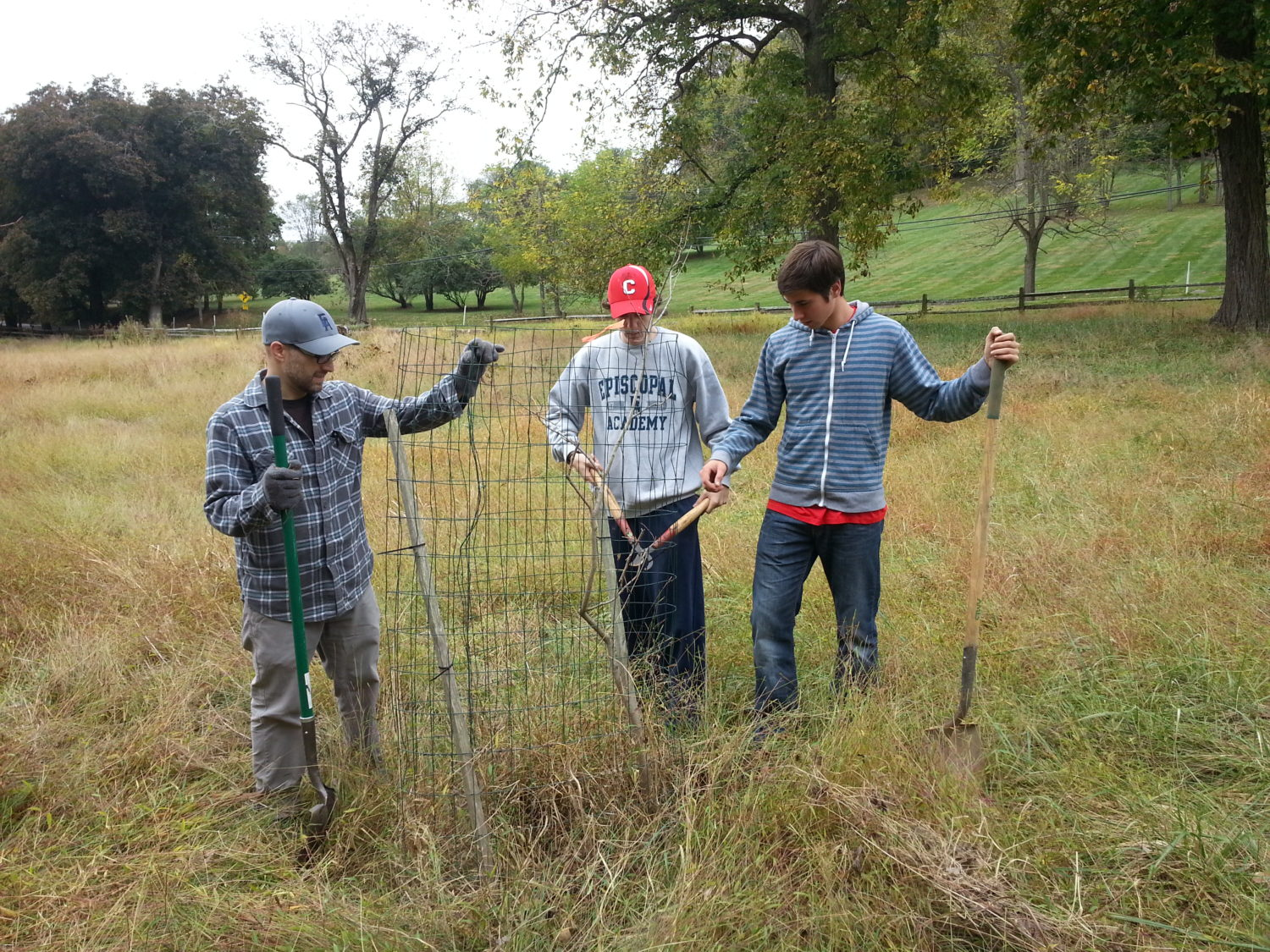 Interns make repairs and remove invasive vines from a cage that protects a young tree at Kirkwood Preserve.
