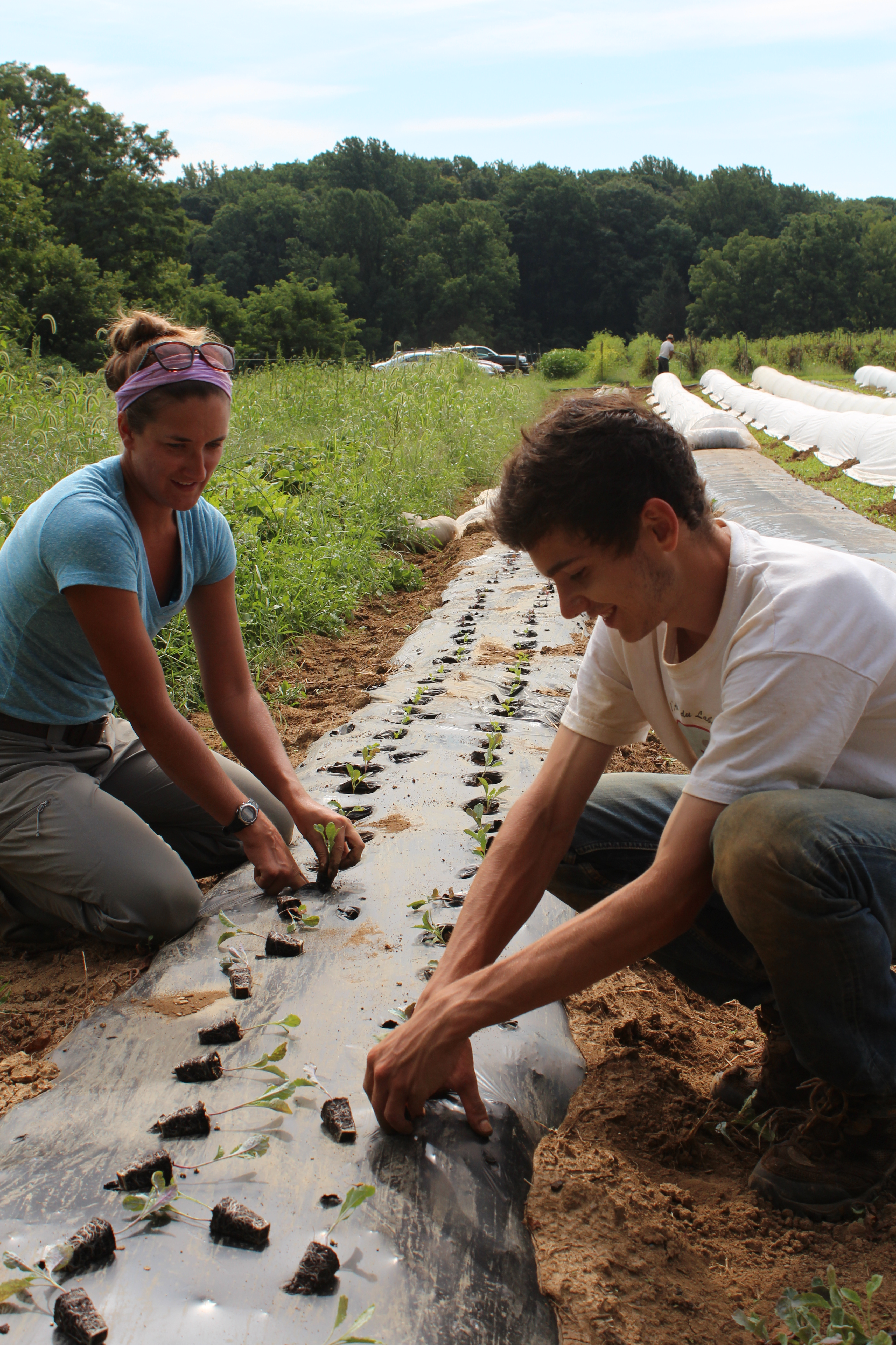 Interns Molly and Fabien plant seedlings in prepared raised beds at Rushton Farm.