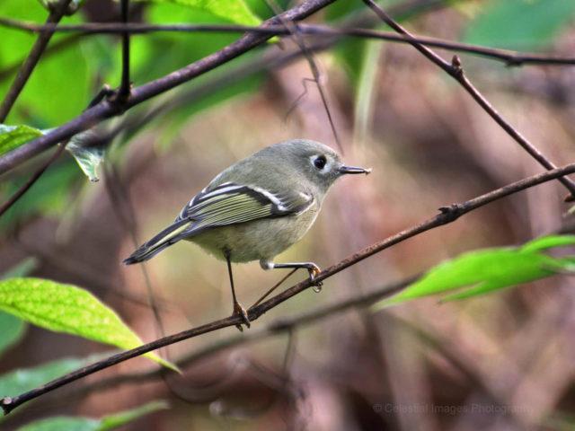 U.S. FISH & WILDLIFE PROVIDES GRANT TO TRACK BIRD SPECIES OF GREATEST CONCERN IN MID-ATLANTIC REGION