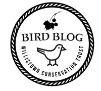 BirdBlogTranspMerged_200