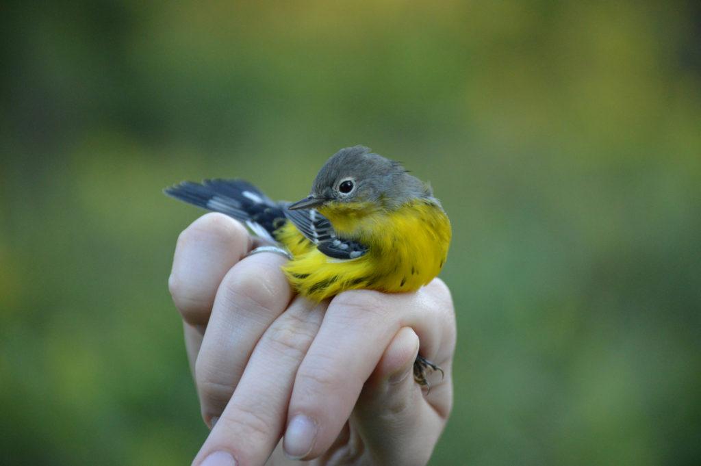 How the Trust Helps Birds