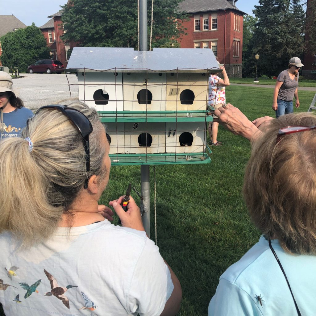 Back to School: Banding a purple martin colony