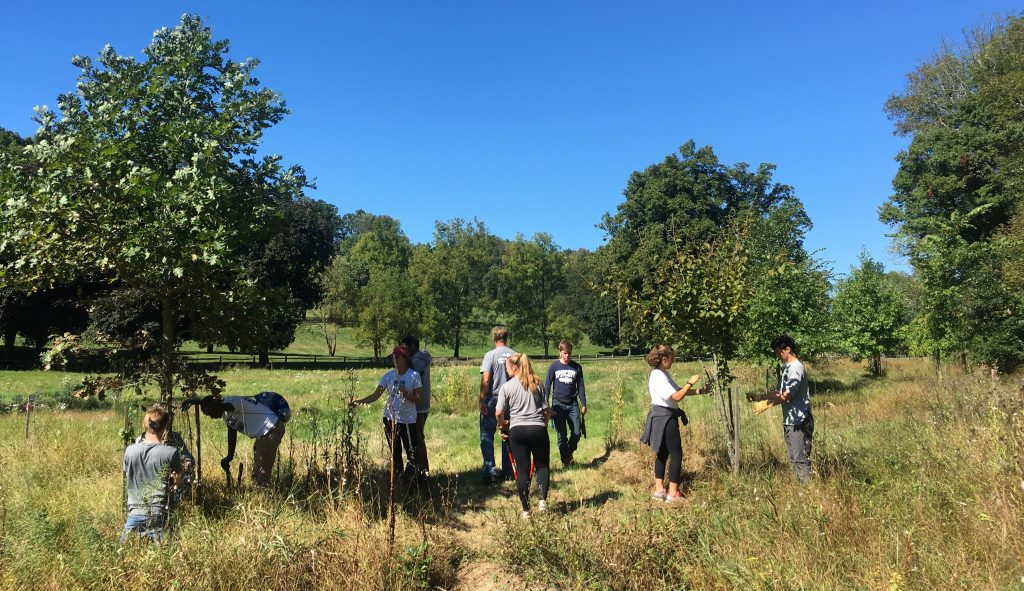 Riparian Buffer Planting – Step 3. Preserve