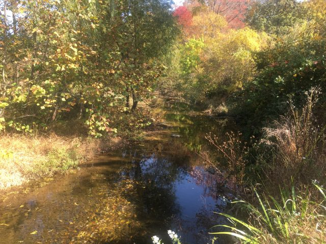 Why Riparian Buffers are So Important & How You Can Help Them