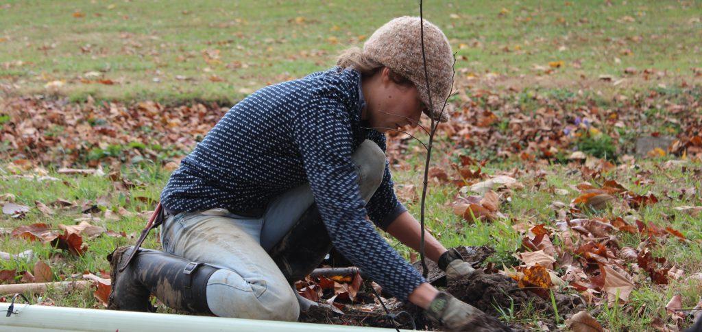 Riparian Buffer Planting – Step 2. Plant