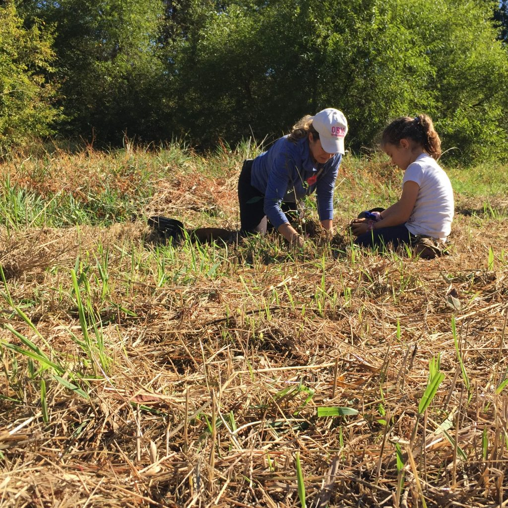 Volunteers Plant 300 Trees To Improve Ridley Creek Watershed