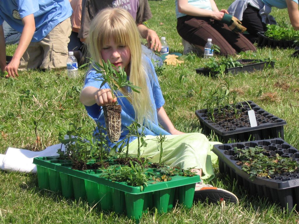 Create Your Own Meadow – Step 2: Plant
