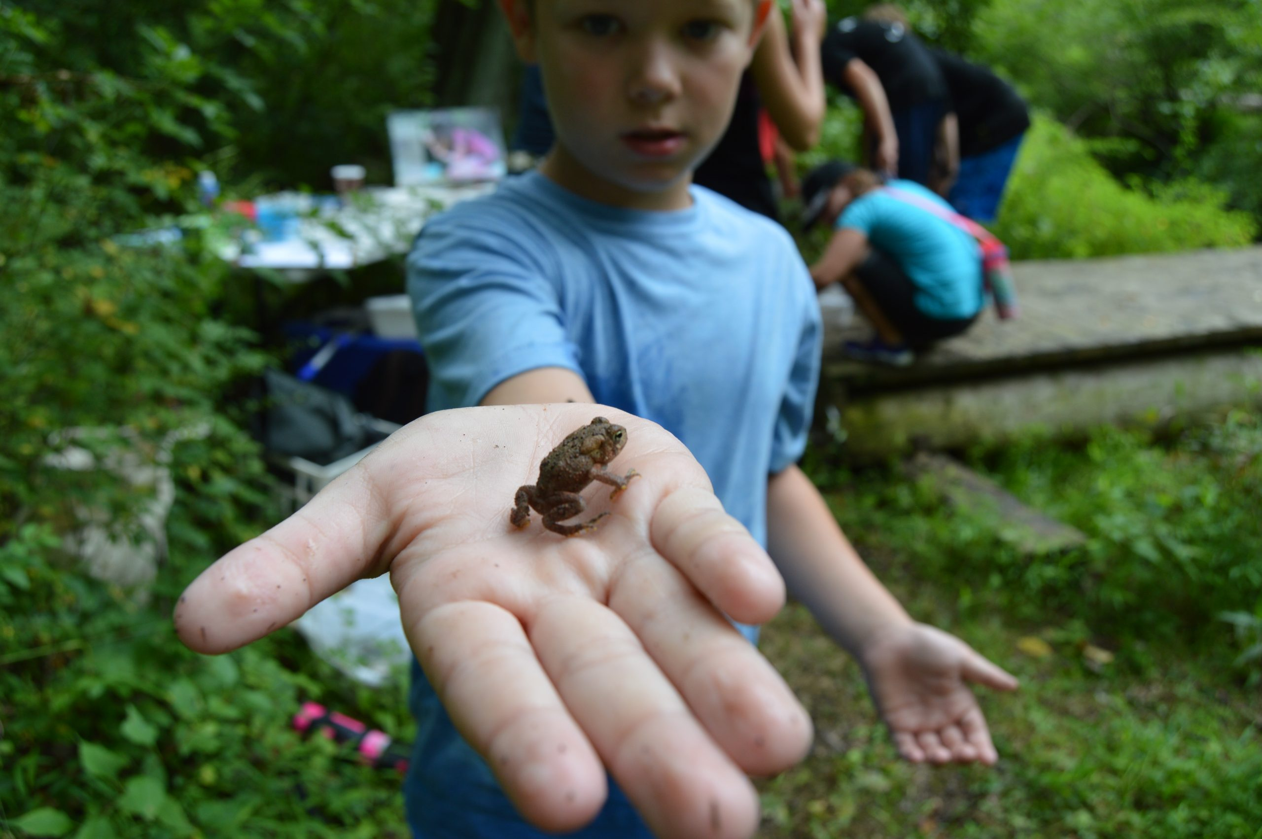 A Nature Keeper shows off a baby toad he found at Rushton Woods Preserve.  Photo by Blake Goll/Staff