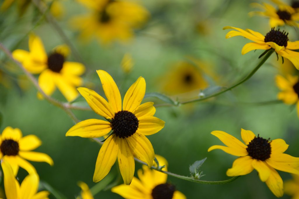 Native Plants for Your Landscape