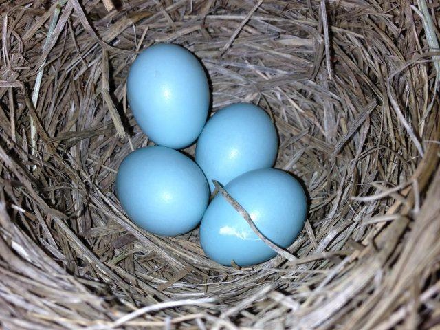 The Bluebird Keeper