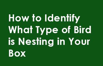 How-to-identify