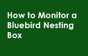 How-to-monitor-bluebird