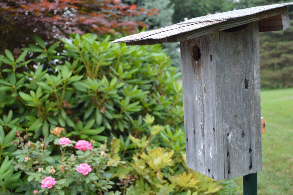 Nesting Birds in Your Yard