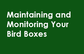 Maintaining-and-monitoring