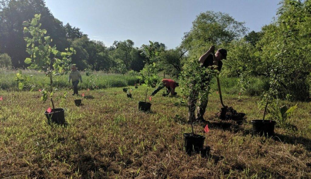 Mapping the Ashbridge Tree Planting