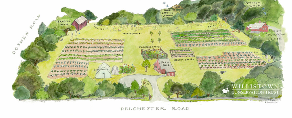The Bees of Rushton Farm: A Pollinator Perspective on Willistown Conservation Trust & Environmental Education