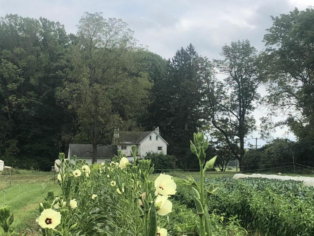 White-Farmhouse