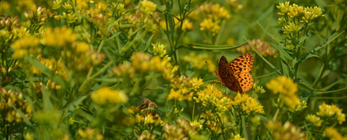 Nature at Night: Native Plants for Your Landscape