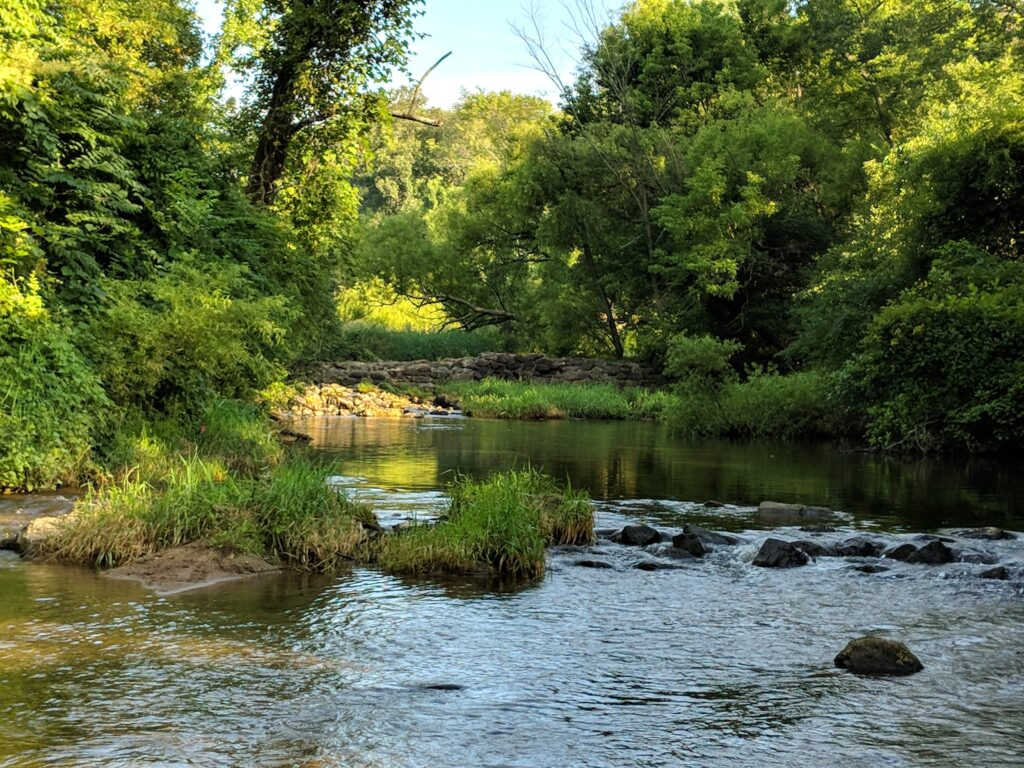 Stream Exploration: Discovering Ridley Creek