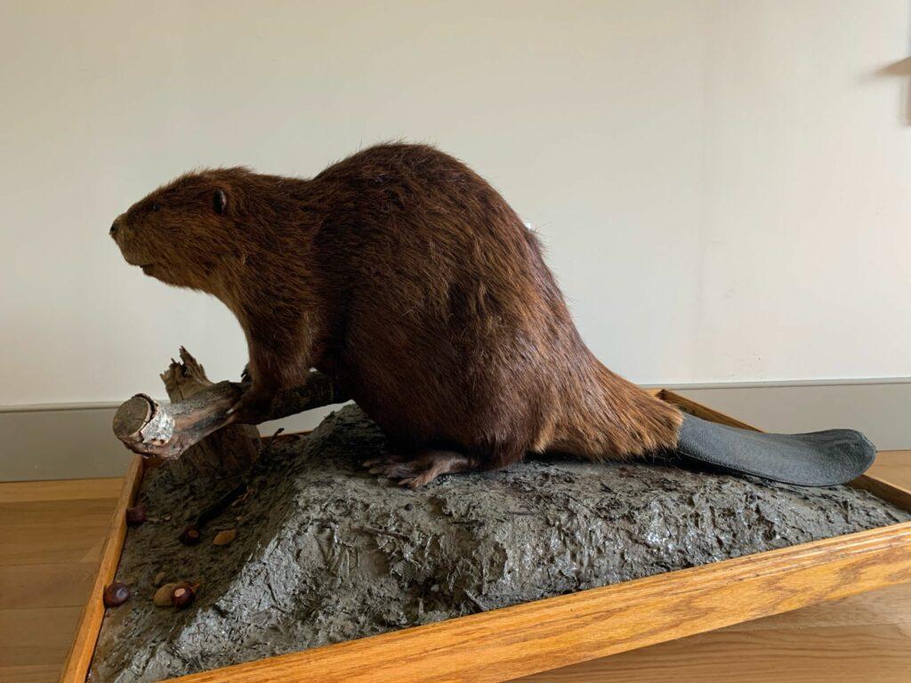 Creek Week: Beaver Business